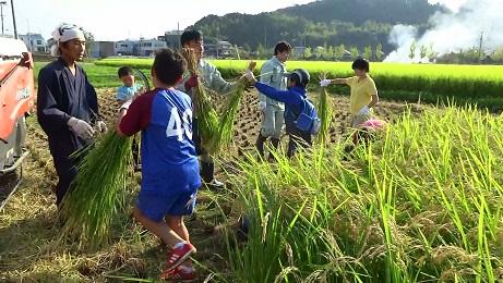 稲刈り.jpg