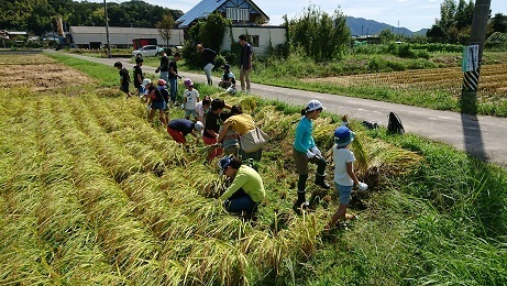 稲刈り1.jpg