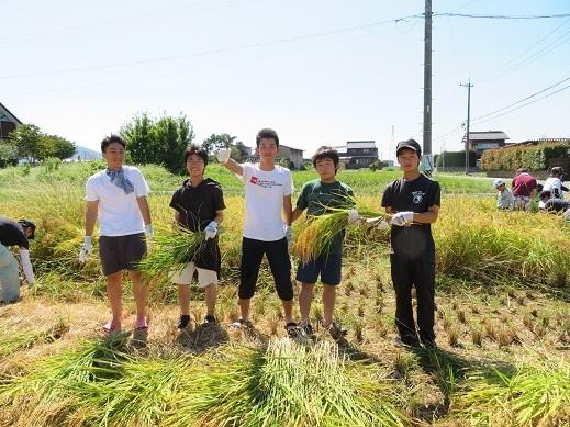稲刈り5.jpg