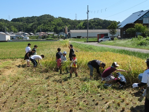 稲刈り6.jpg