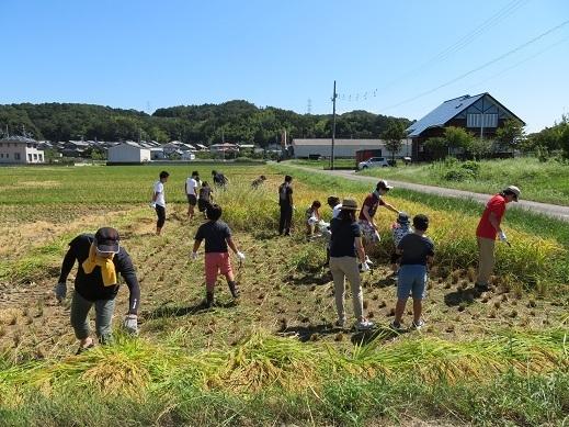稲刈り8.jpg